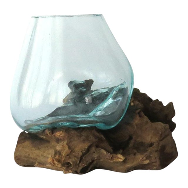 Glass on Teak Driftwood Terrarium - Image 1 of 7