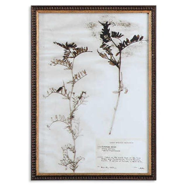 18 Traditional botanical presses in dark brown frames with a gold glaze and detailing. All in shades of taupe, brown, off-...