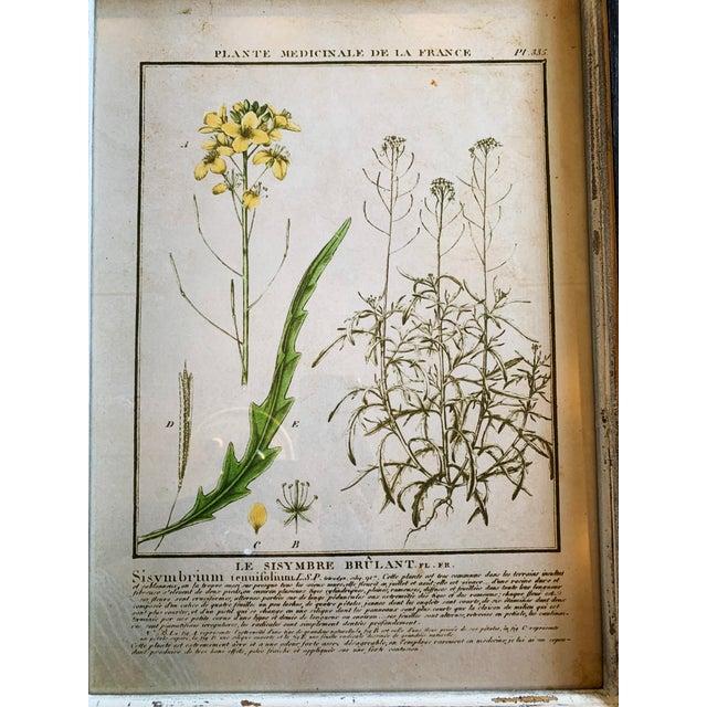 Wood Vintage Framed French Botanical Prints Reproductions - Set of 4 For Sale - Image 7 of 13