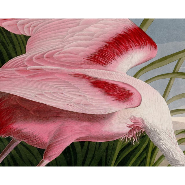 John James Audubon Audubon Roseate Spoonbill Giclee Print For Sale - Image 4 of 8