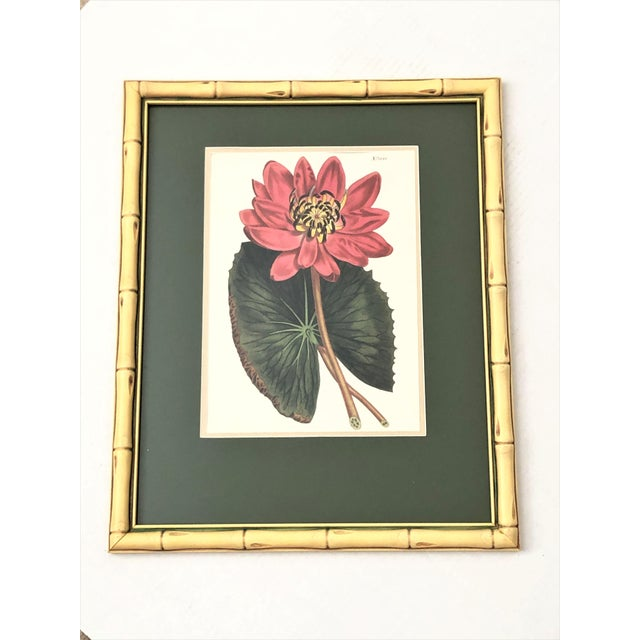 Set of four large scale vibrant mid-century botanical prints. Presented in Chinoiserie faux bamboo frames.