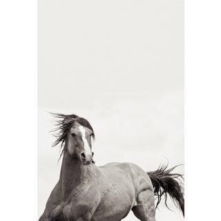 Kimerlee Curyl, 'Valiant' For Sale