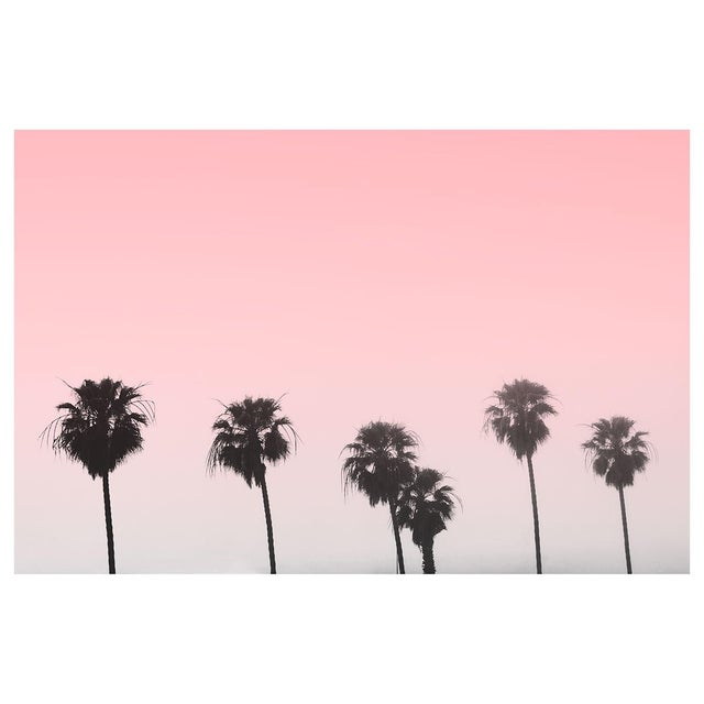 """""""Pink Palm Trees With Sky"""" Contemporary Color Photograph 24"""" X 36"""" For Sale"""