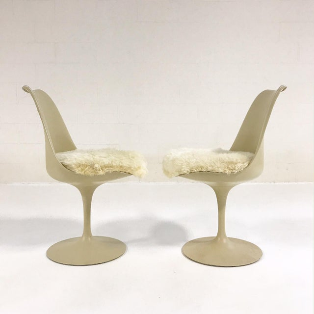 Eero Saarinen Tulip Chairs with Custom Brazilian Sheepskin Cushions - Set of 6 - Image 6 of 9