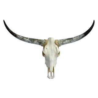 Texas Longhorn Skull For Sale
