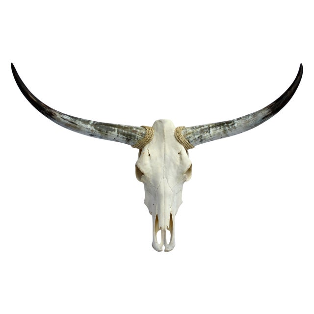 Texas Longhorn Skull For Sale