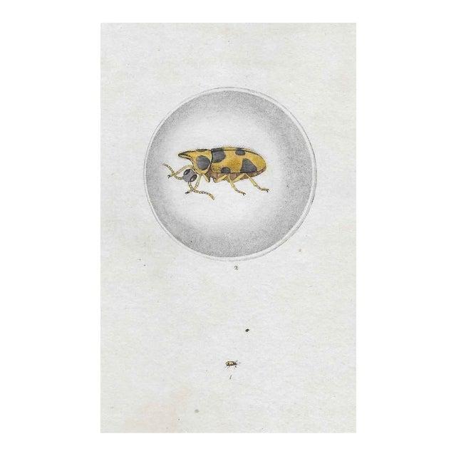 19th Century Entomology Engraving For Sale