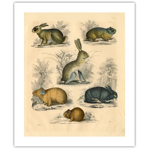 Antique 'Small Animals' Archival Print - Image 2 of 4