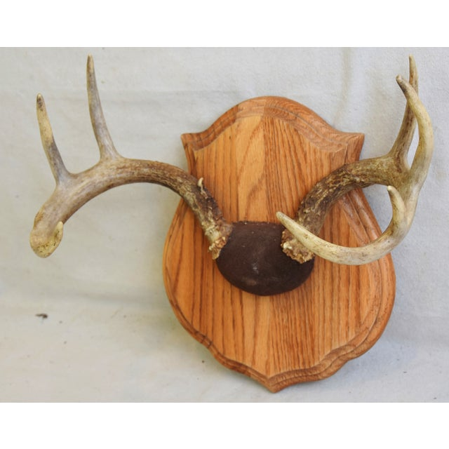 Abstract Expressionism Vintage Mounted Trophy Antlers on Wood Plaque For Sale - Image 3 of 8