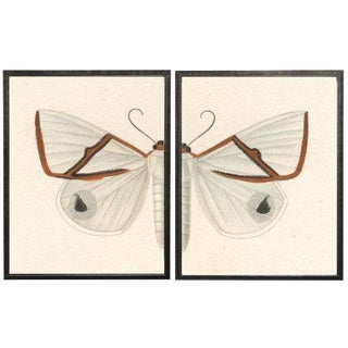"Split White and Red Butterfly - 46"" X 29"" For Sale"