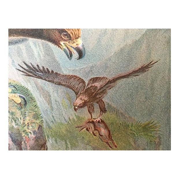 Antique Golden Eagle Lithograph, C. 1900 For Sale - Image 4 of 5