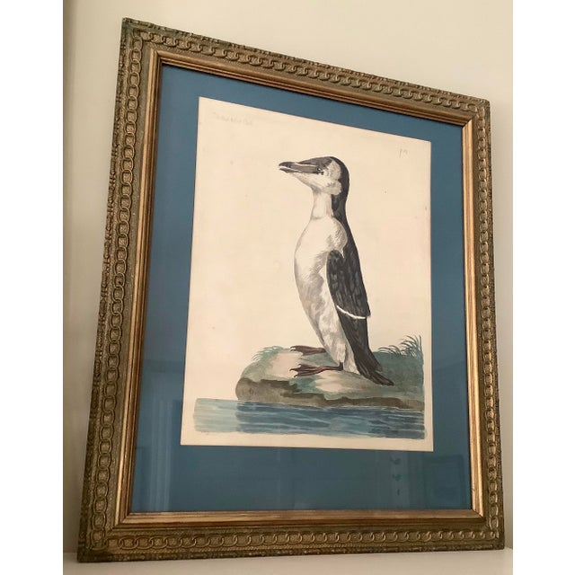 18th Century Antique Original Peter Mozell Engraving by T Pennant For Sale - Image 11 of 11