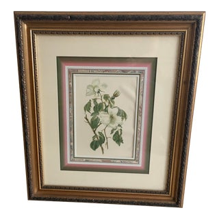 """Antique Botanical Print """"Wilmotts Roses"""" For Sale"""