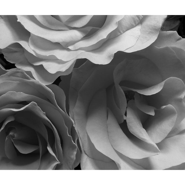 Shabby Chic Louise Weinberg Blooming Roses in Black & White Original Photograph For Sale - Image 3 of 3
