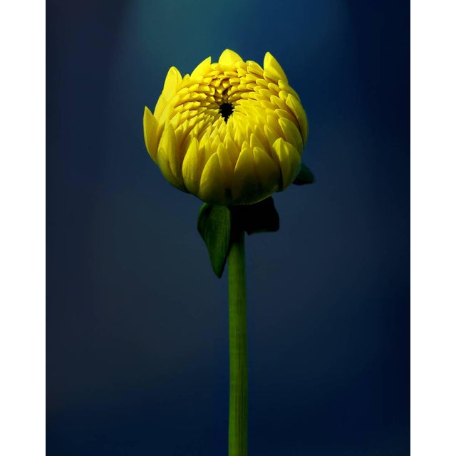 """Yellow Rising"" Photograph - Image 1 of 2"