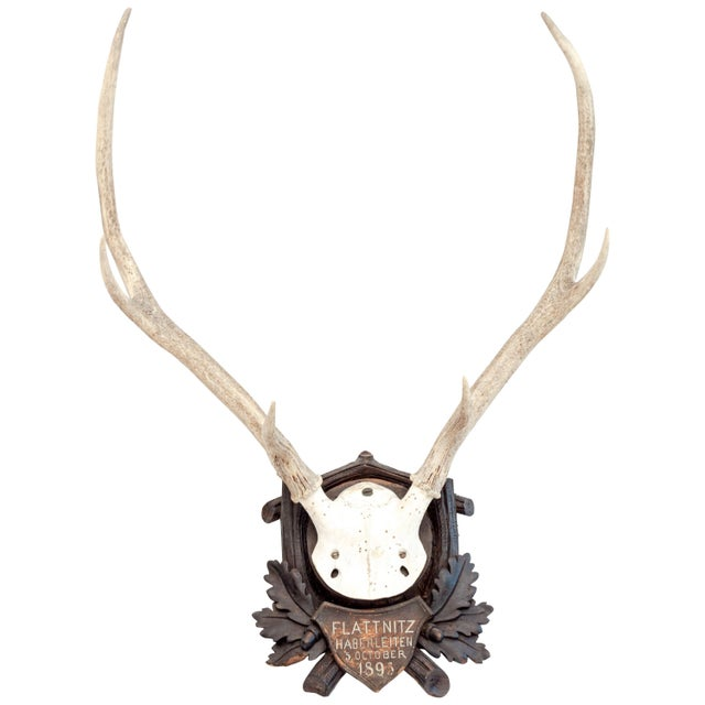 Late 19th Century Mounted Stag Antlers Dated 1896 For Sale - Image 5 of 5
