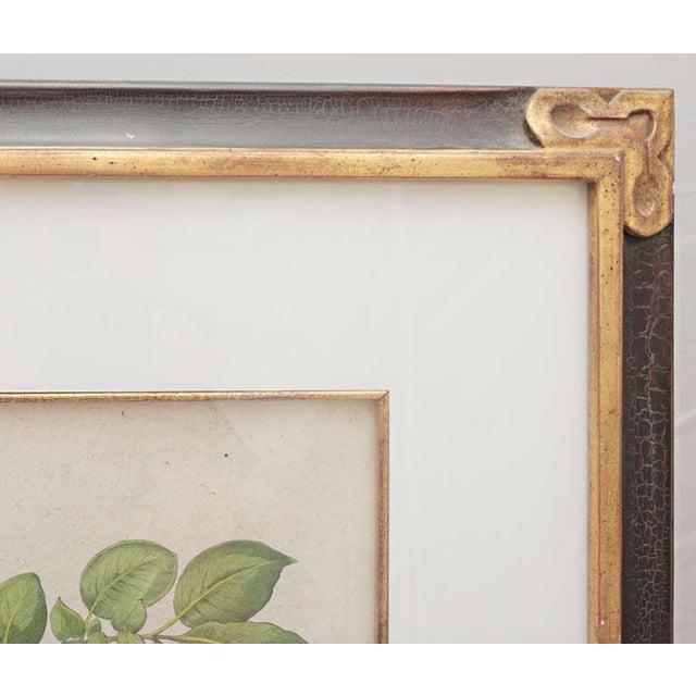 Boho Chic Basil Besler Botanical Print For Sale - Image 3 of 5
