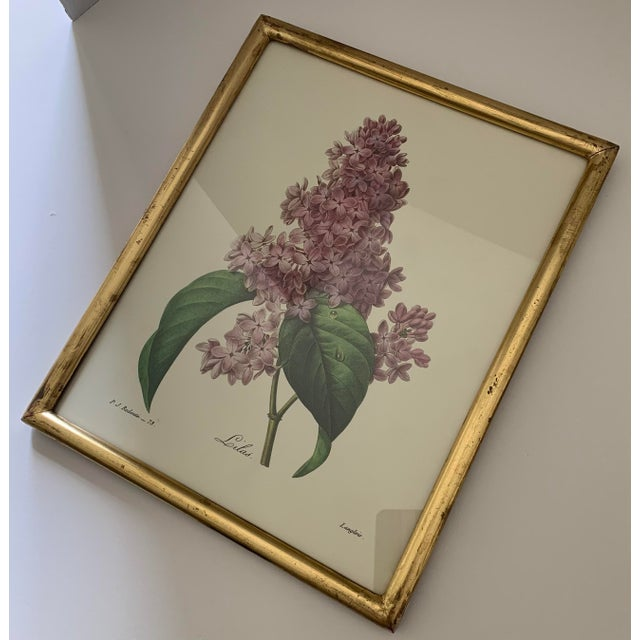 Cream Reproduction Antique Botanical Print Lilac Framed For Sale - Image 8 of 12