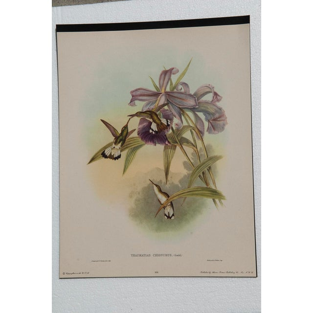 1940s John Gould Hummingbird Lithographs - Set of 6 (Marked Down to $35 Until September 15th) - Image 10 of 11