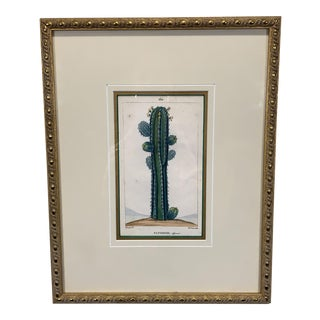 Early 18th Century Antique Hand Colored Cactus Etching Print For Sale