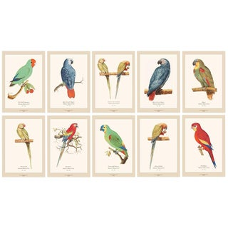 XL 1590s Contemporary Prints of Anselmus Boëtius De Boodt Parrots - Set of 10 For Sale