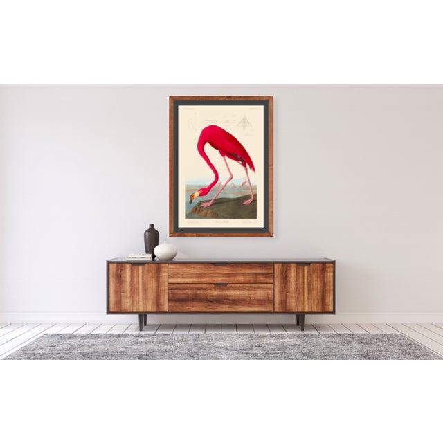 John James Audubon Print, American Flamingo For Sale In Greenville, SC - Image 6 of 6