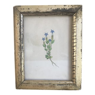 Antique Miniature Botanical Hand Colored Engraving in Gold Leaf Frame For Sale