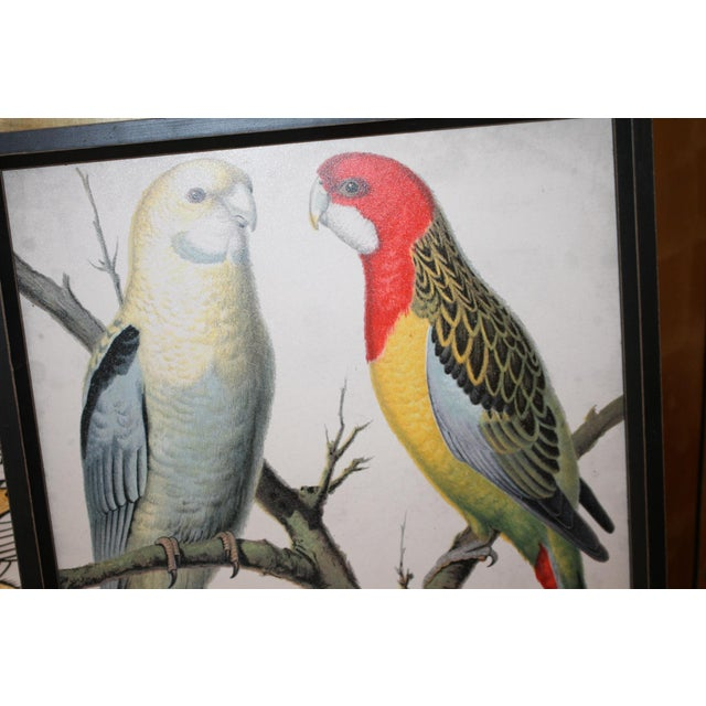 C Print Framed Bird Wall Art Prints Pictures - Set of 4 For Sale - Image 7 of 9