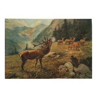 German vintage deer school poster For Sale