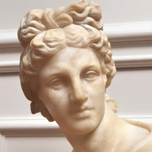 19th Century Italian Grand Tour Souvenir Bust of the Apollo Belvedere For Sale - Image 10 of 13