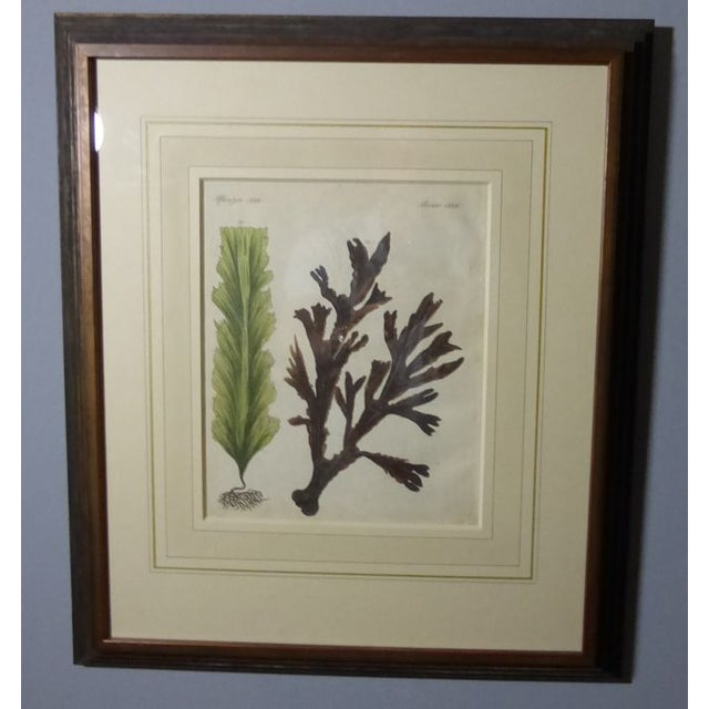Antique Framed Nautical Engravings - Set of 6 - Image 7 of 8