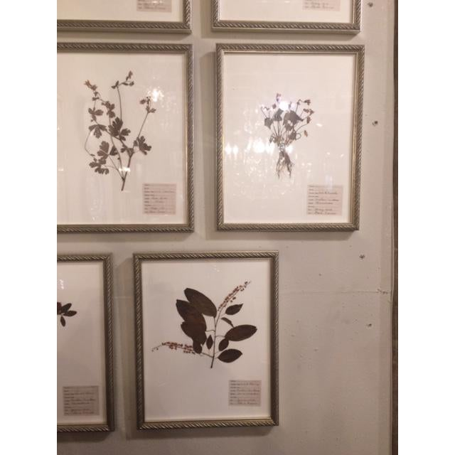 Antique Herbarium Framed Plants - Set of 8 For Sale - Image 4 of 9