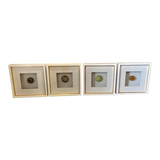 Sea Urchins Art Work - Set of 4 For Sale