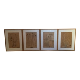 1940's French Dried Botanical Artwork - Set of 4 For Sale