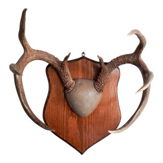 Mid Century Deer Antler Mount For Sale