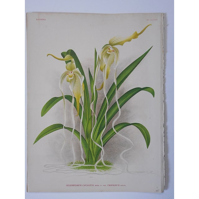 Realism Orchid Lithograph For Sale - Image 3 of 3