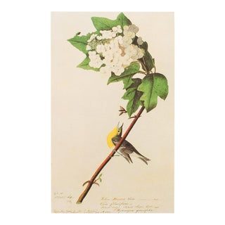 1960s Vintage Audubon Yellow Throated Vireo Reproduction Lithograph Print For Sale