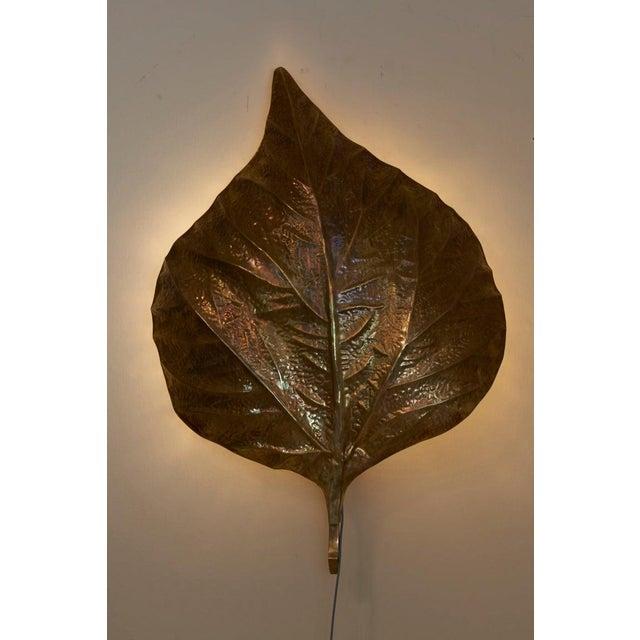 1 of 4 Huge Rhaburb Leaf Brass Wall Lights or Sconces by Tommaso Barbi For Sale - Image 12 of 13