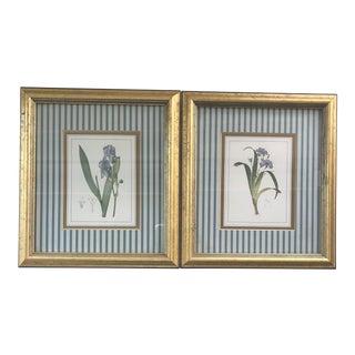 1970s Vintage Botanical Irises Prints Framed & Matted - a Pair For Sale