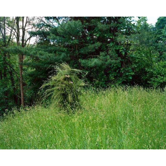 Jeremy Chandler, Ghillie Suit (Grass), 2013 For Sale