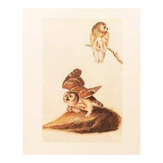 1960s Vintage Audubon Saw-Whet Owl Lithograph For Sale