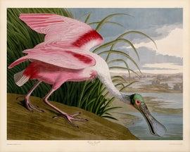 Image of Newly Made John James Audubon