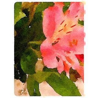 """Amaryllis"" Botanical Print by Jean Montanti For Sale"