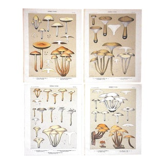 Set of 4-Authentic Antique Lithographs-Mushrooms For Sale