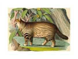 Image of Safari Prints