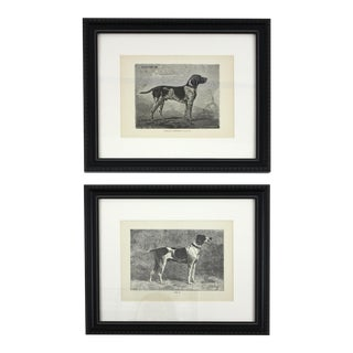 Antique Hunting Hound Engravings - A Pair For Sale