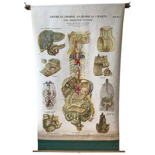 Frohse Anatomical Chart by a.j. Nystrom, Plate No. 8: Digestive System, 1947 For Sale