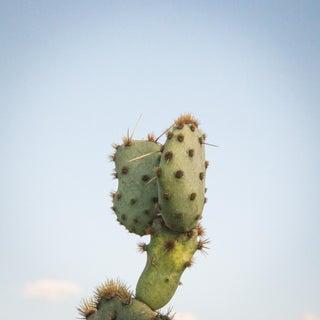 Prickly Pear & Blue Sky Photograph Print