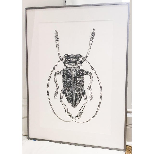 Contemporary Bessie Daschbach Original Insect Drawing For Sale - Image 3 of 3