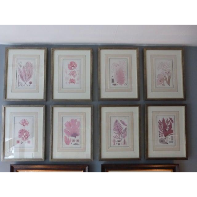 Antique Seaweed Engravings - Set of 8 - Image 2 of 8